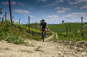Cycling along the Međimurje vineyards provides just enough hills and valleys for an interesting ride
