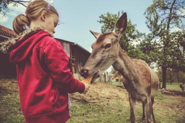 The deer farm is one of the liveliest and most interesting attractions in the whole of Međimurje