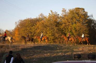Tame and experienced horses of noble breed will take you on trails through the woods and meadows
