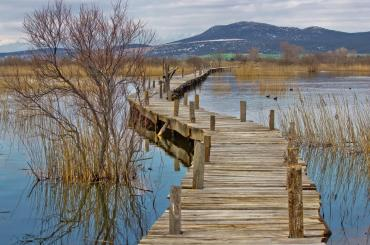 The marshes of Vransko Jezero are home to an incredible number of bird species