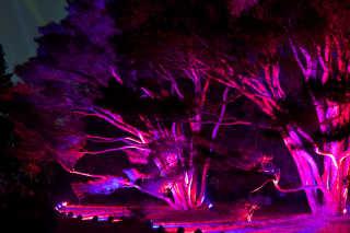 The Morton Arboretum Illumination