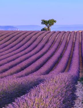 Best time to visit Provence & French Riviera