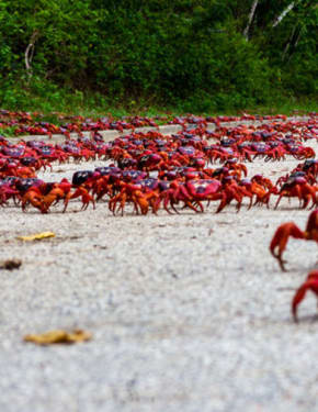 Best time to visit Christmas Island