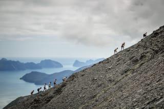 Seward's Mount Marathon Race