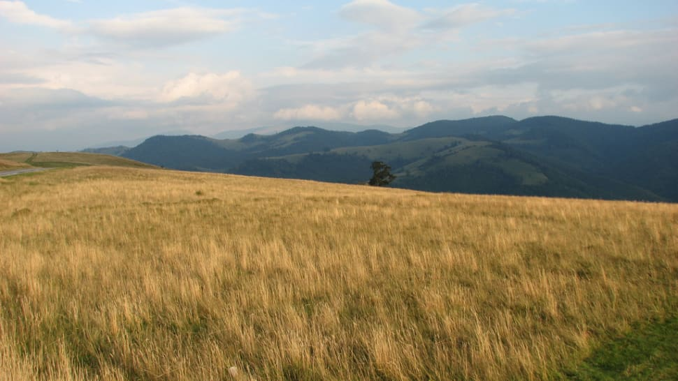 Best time for Hay Harvest in Romania