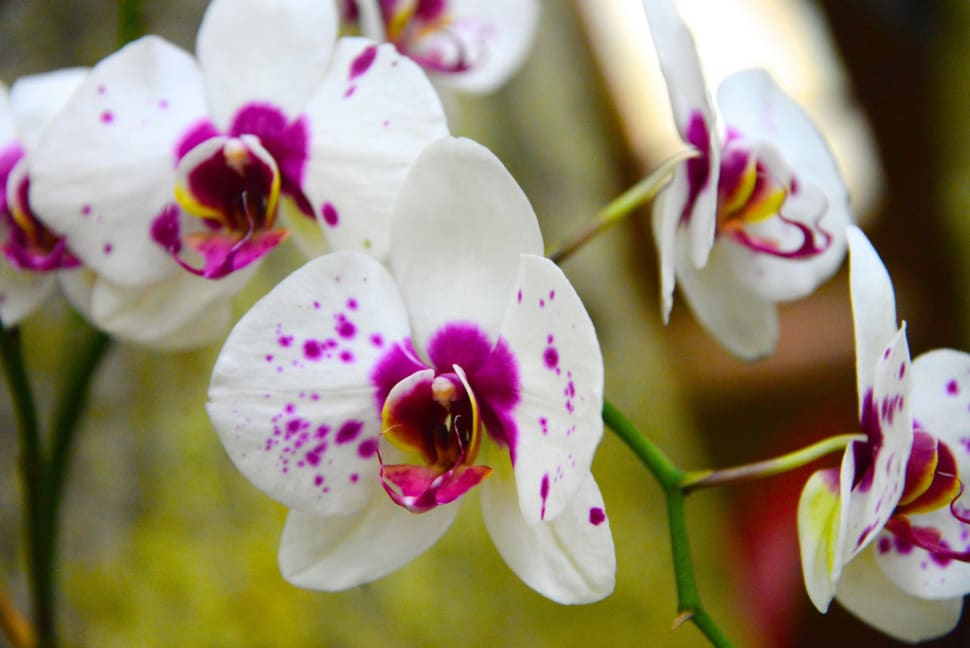 Best time for Orchids in Costa Rica