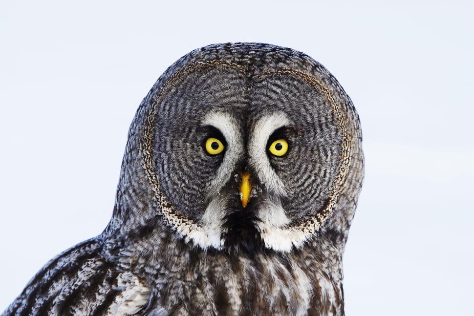 Birdwatching in Finland - Best Time