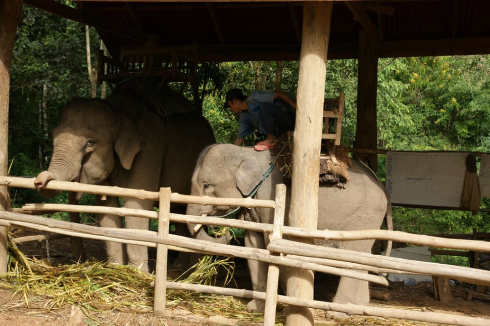 Caring for an Elephant in Laos - Best Season
