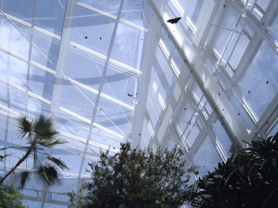 Best time for Butterfly Conservatory