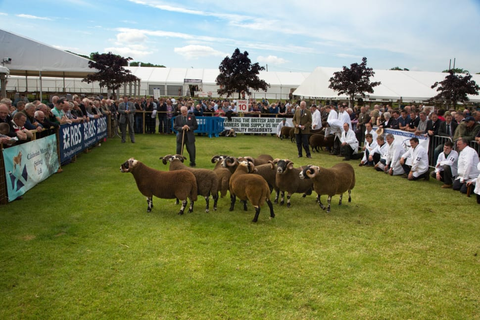 Best time to see Royal Highland Show in Scotland
