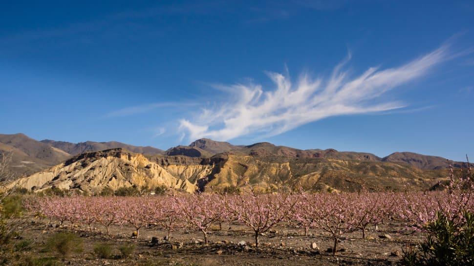 Best time for Tabernas, Europe's Only Desert in Spain