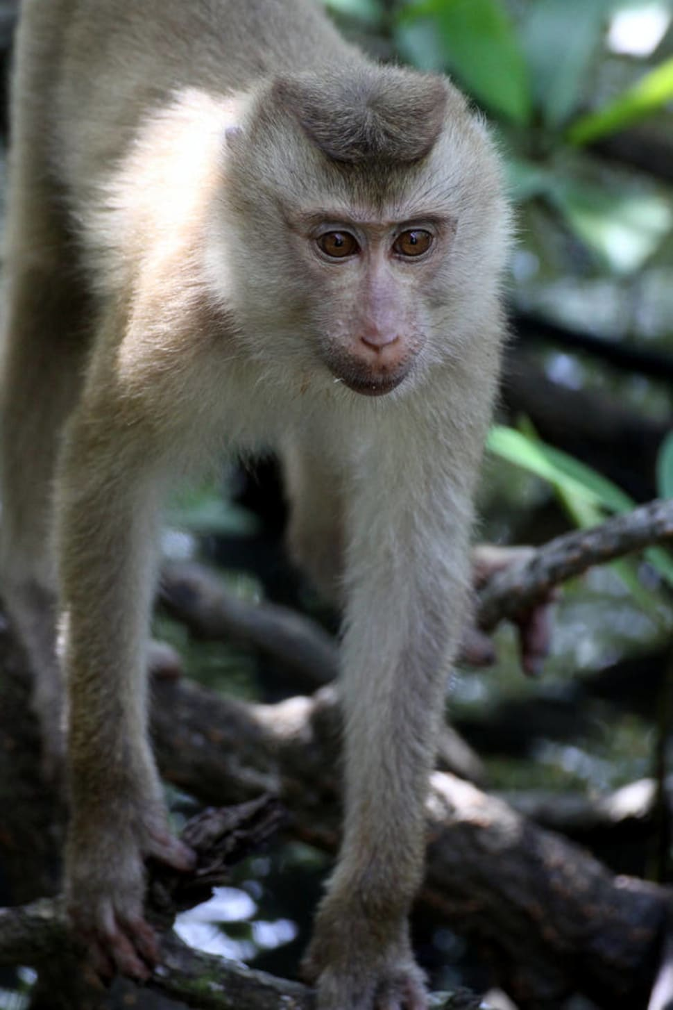Best time to see Explore Wildlife in the Ream National Park in Cambodia