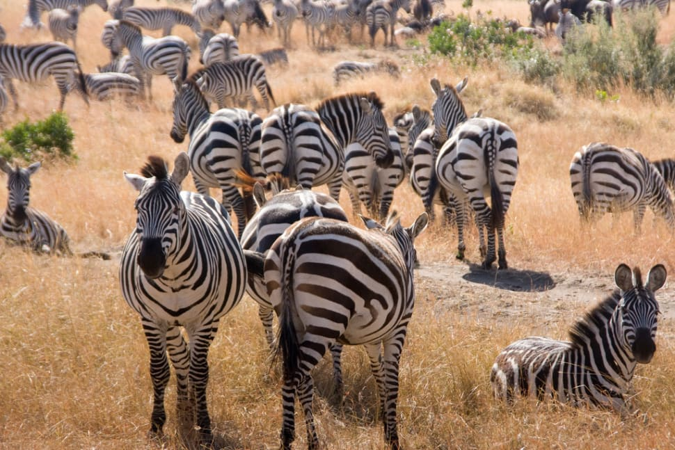 Safari Adventure in Kenya - Best Season