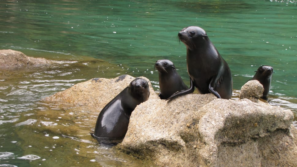 Best time to see Baby Fur Seals Watching in New Zealand