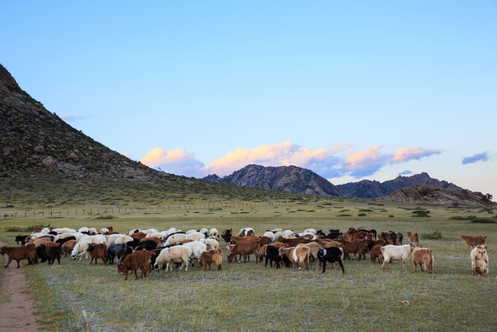 Wildlife Watching in Mongolia - Best Season