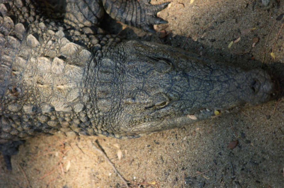 Caving with Crocodiles in Madagascar - Best Time