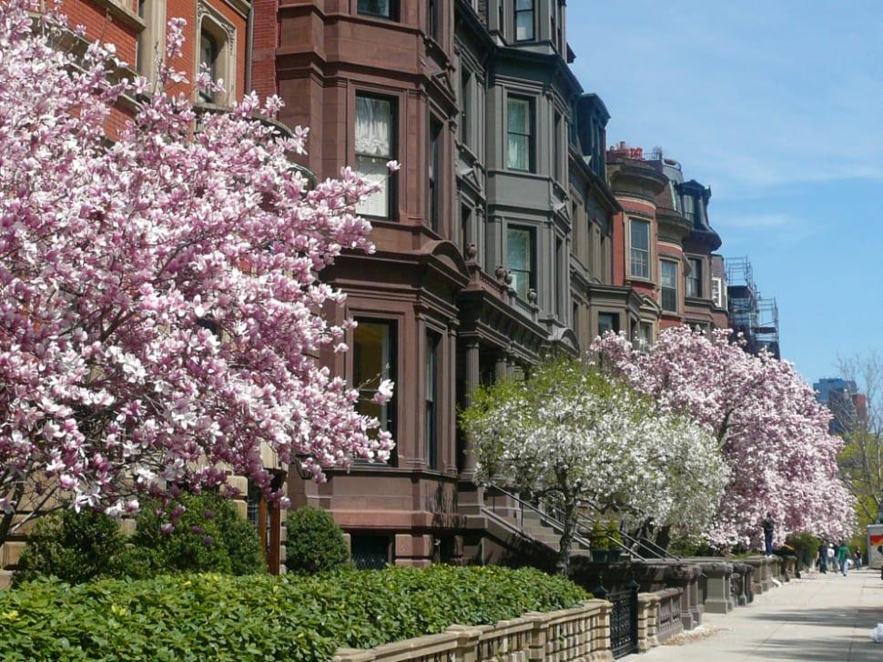 Spring in Boston - Best Time