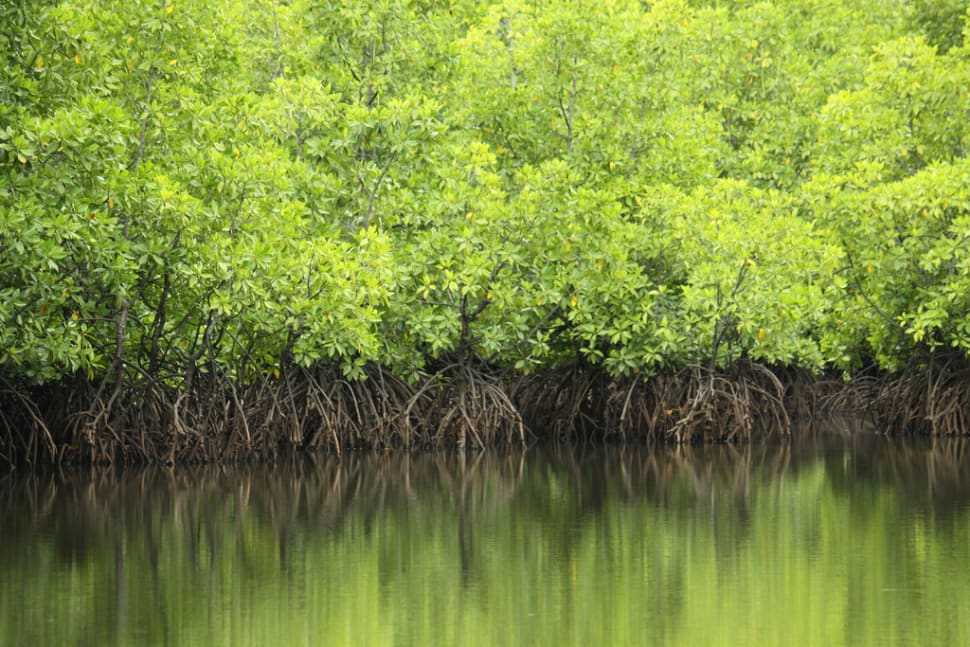 Mangrove Forests in Malaysia - Best Time