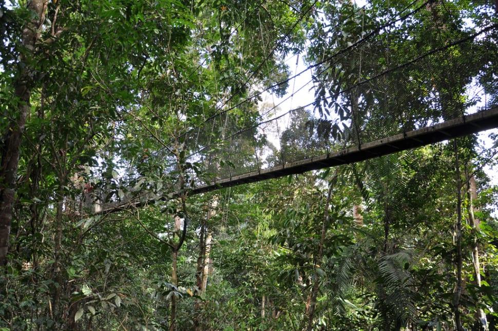 Parting shot of the rope bridge in Kota Kinabalu