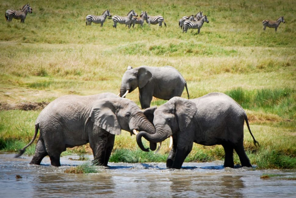 Elephant Herds in Tanzania - Best Time