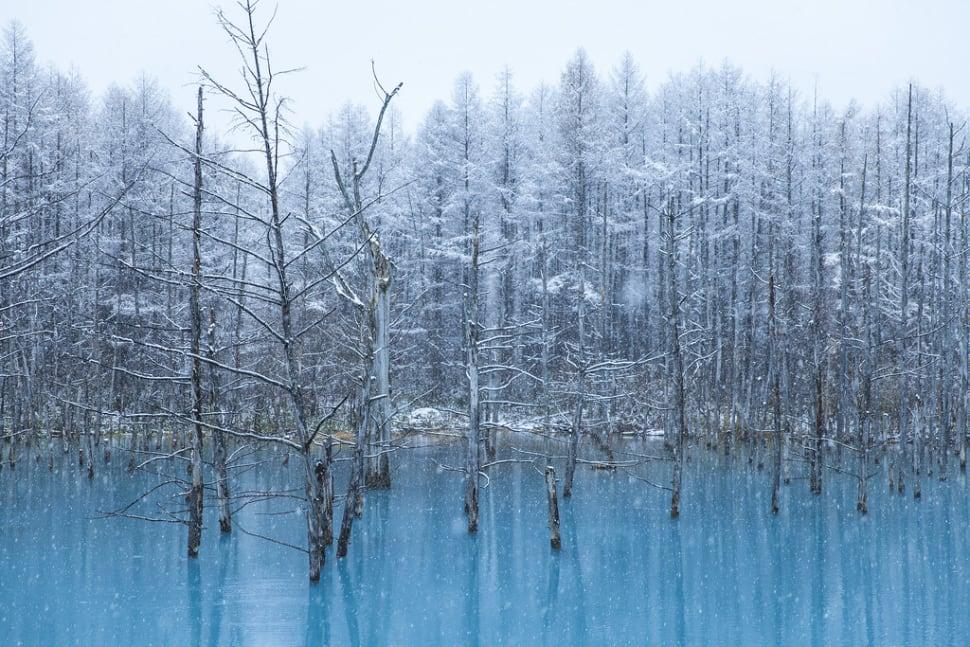 Winter Magic of Biei Blue Pond in Japan - Best Season