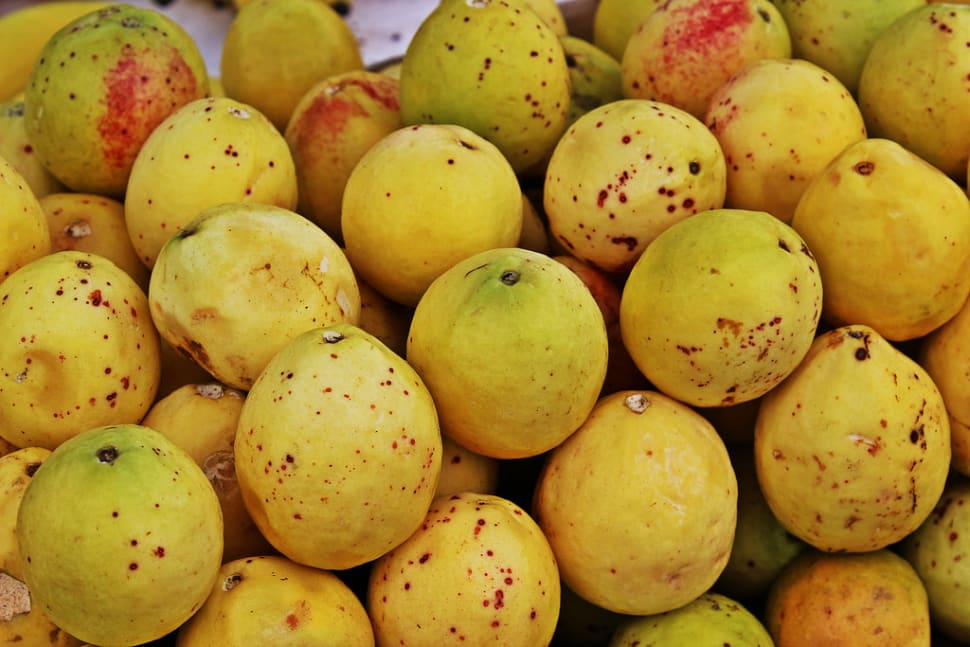 Guayaba (Guava) in Mexico - Best Time