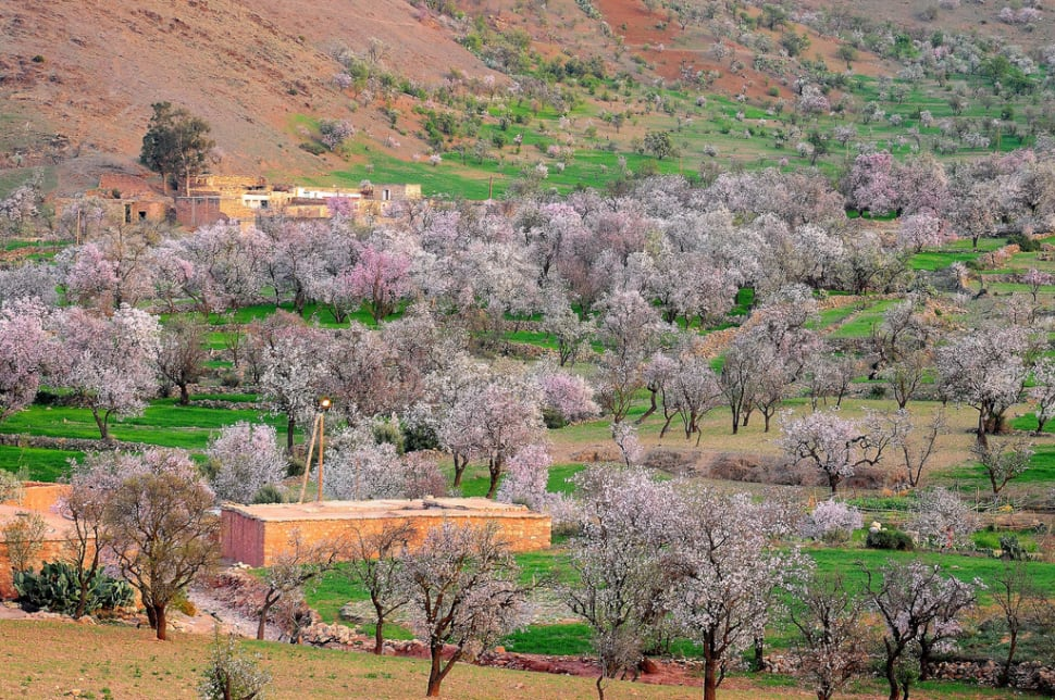 Almond Blossom Season in Morocco - Best Time