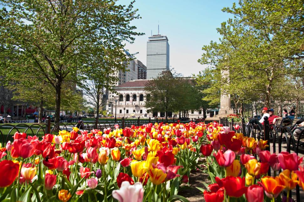Spring Blooms in Boston - Best Season