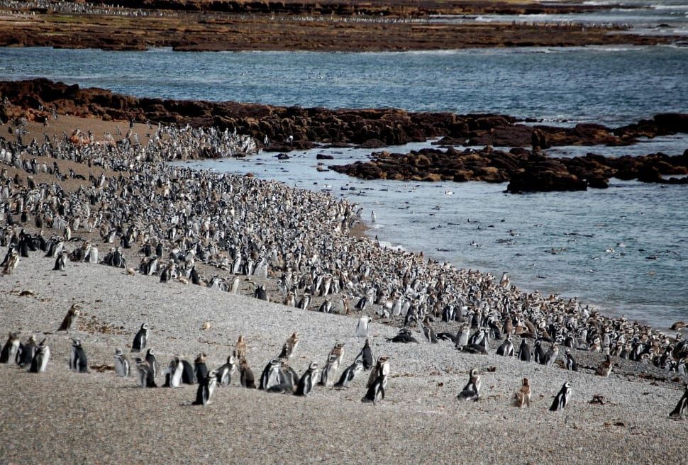 Punta Tomba Penguin Rookery