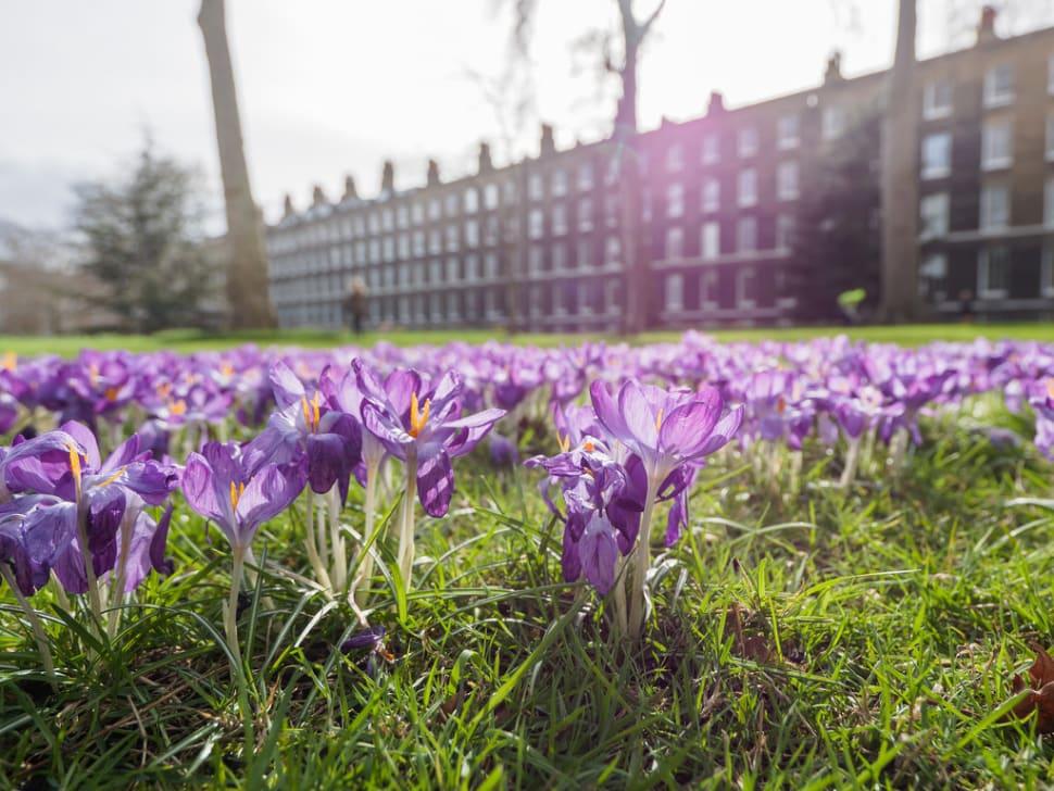 Spring in London - Best Season