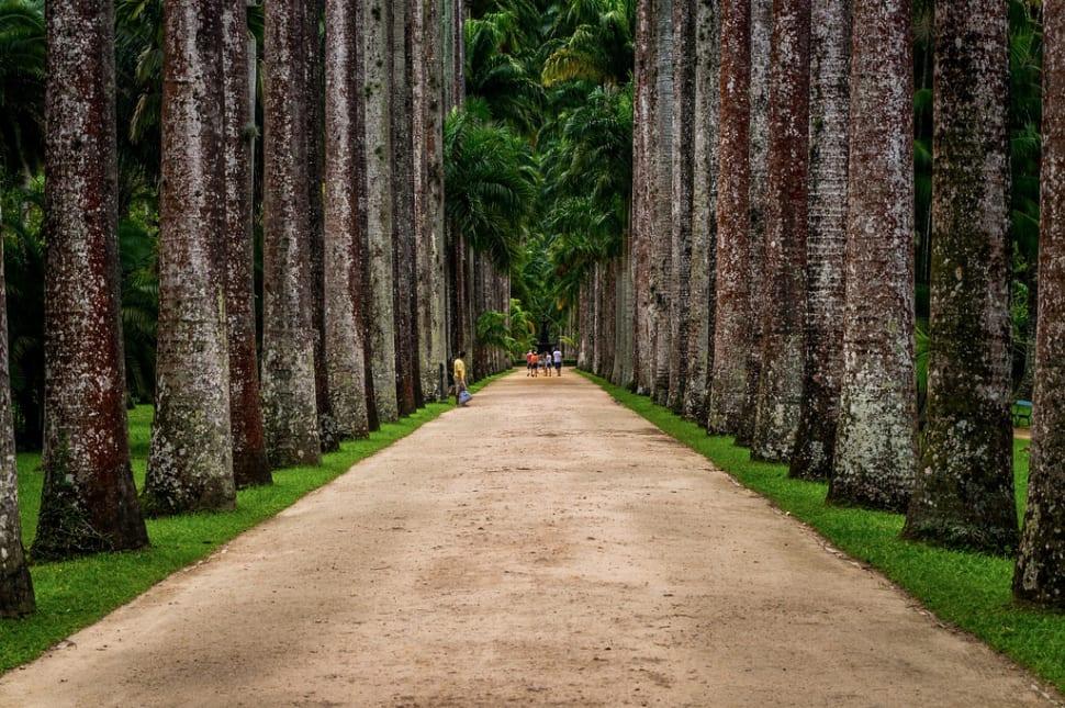 Botanical Garden or Jardim Botânico in Rio de Janeiro - Best Season