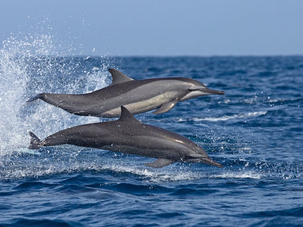 Dolphins Watching in Sri Lanka - Best Time