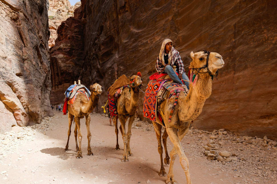 Camel Safari in Jordan - Best Time