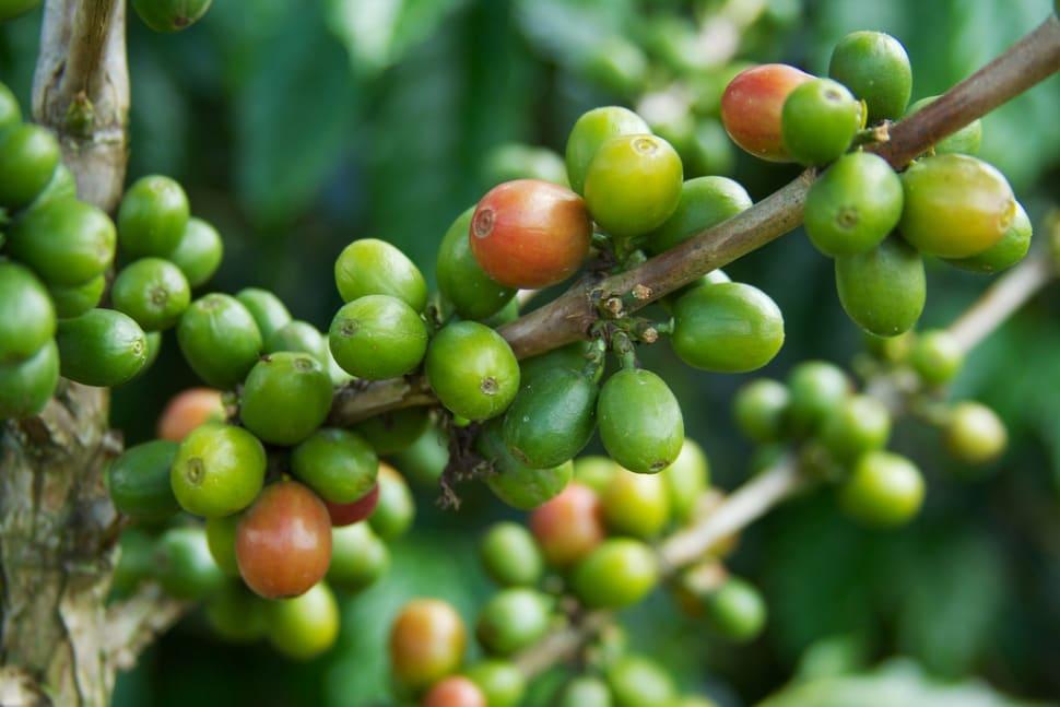 Coffee Harvest in Colombia - Best Season