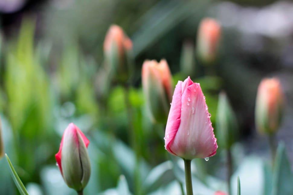 Blooming Season in Vancouver - Best Season
