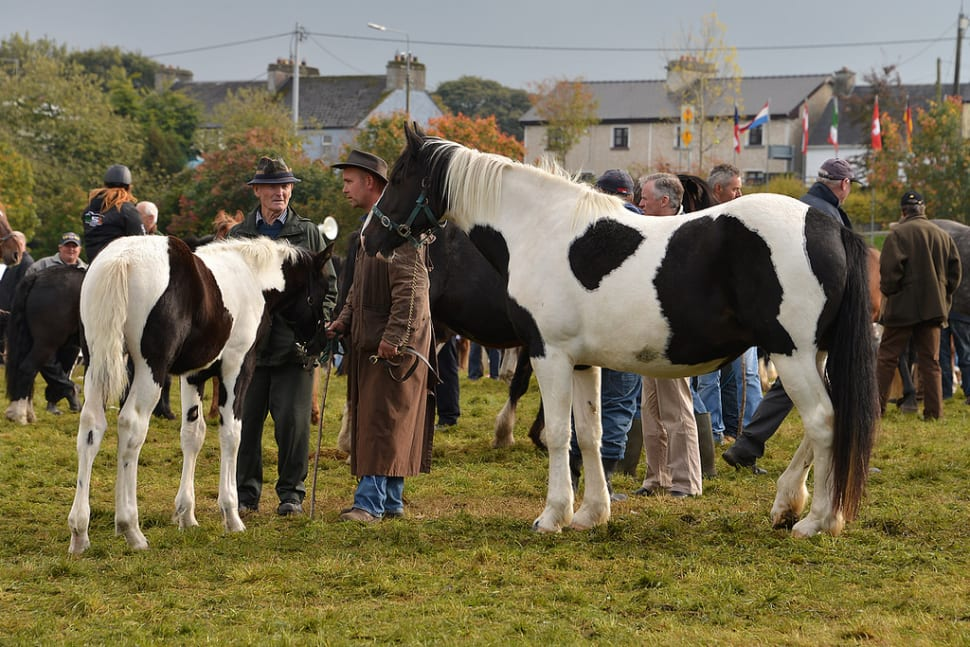 Ballinasloe Horse Fair in Ireland - Best Time