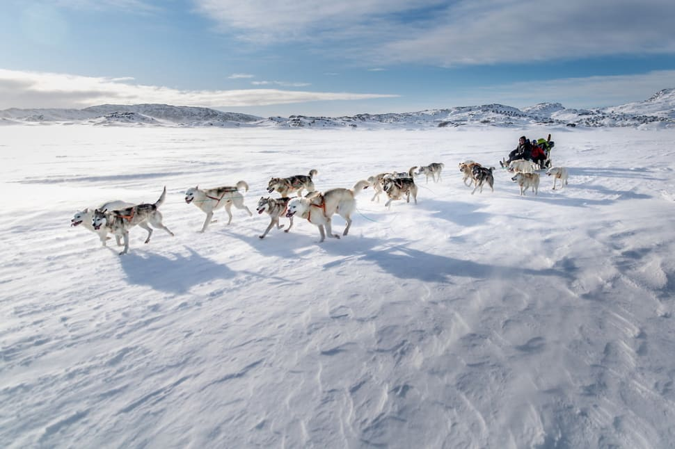 Best time for Dog Sledding in Greenland