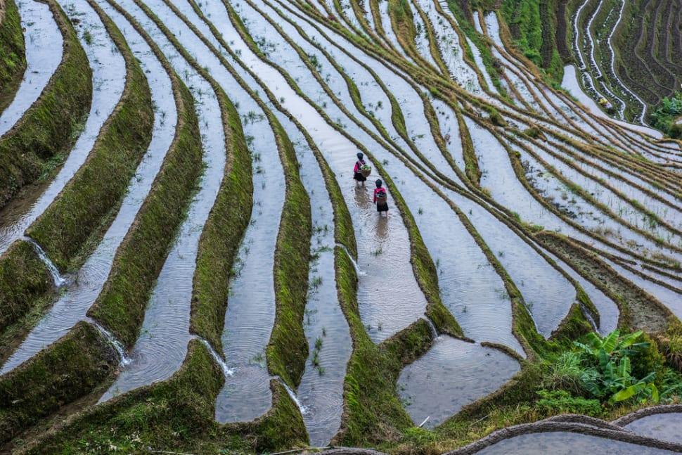 Best time for Longsheng (Longji) Rice Terraces in China