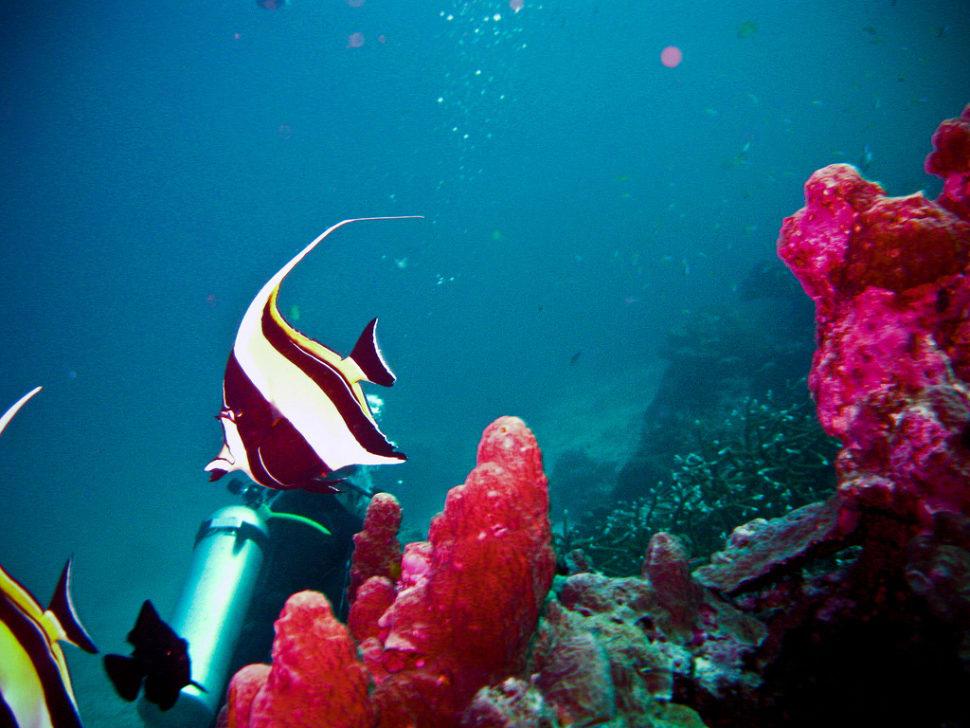 Diving in Thailand - Best Season
