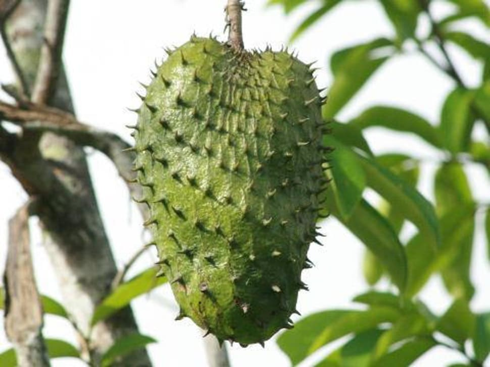 Soursop Season in Fiji - Best Season
