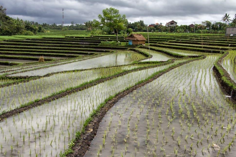 Wet Monsoon or Rainy Season in Bali - Best Season