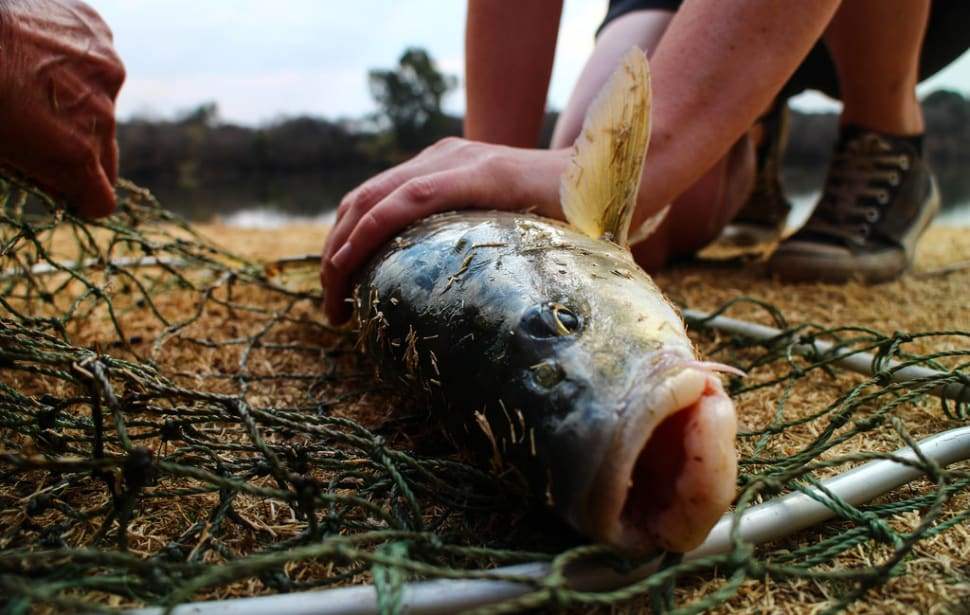 Fishing Season in South Africa - Best Time