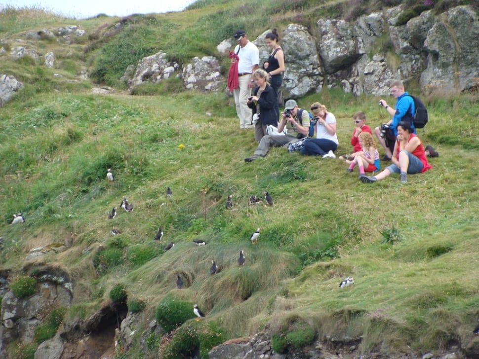 Watching puffins on Staffa Island