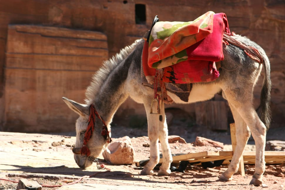 Donkey Ride in Jordan - Best Time