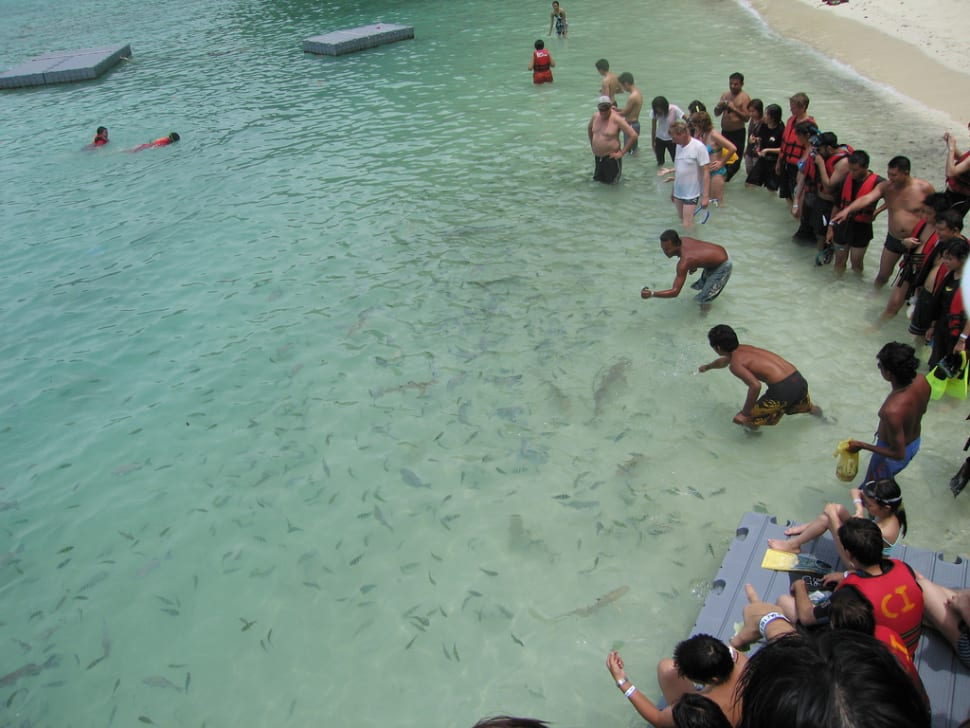 Feeding Baby Sharks in Malaysia - Best Time