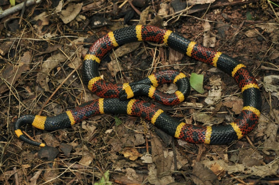 Snake Season in Texas - Best Time