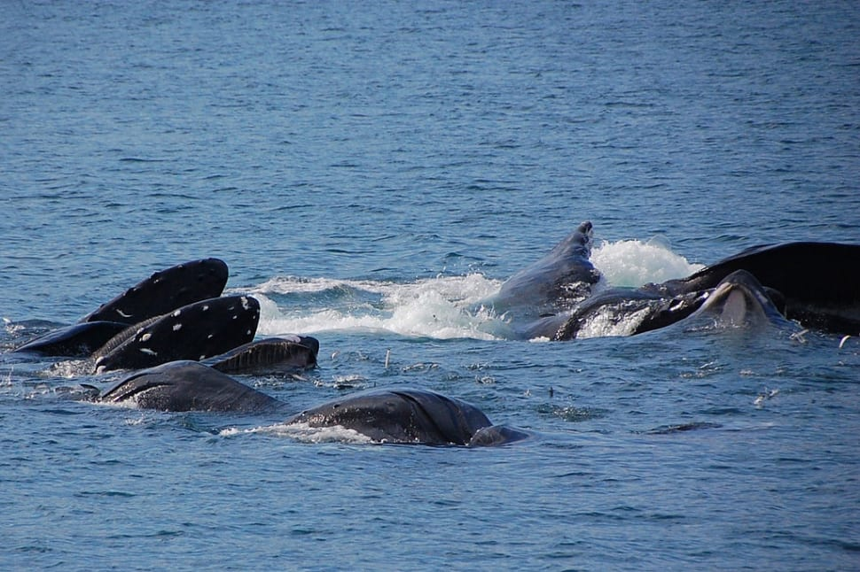 Humpback Whales in Fiji - Best Season