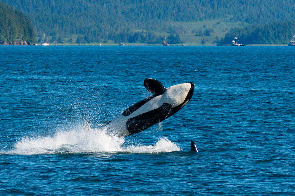 Whale Watching in Alaska - Best Time