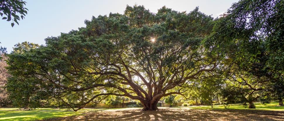 Morning light in the Royal Botanic Garden
