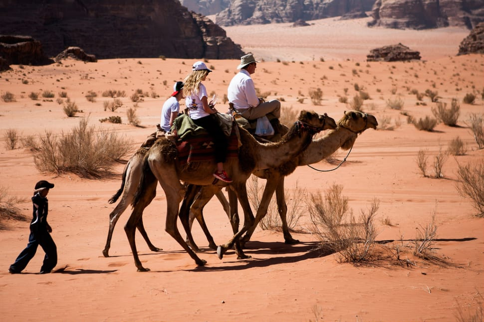 Camel Safari in Jordan - Best Season